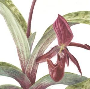 2013 annual botanic garden exhibition at the University of California Botanic Gardens at Berkely