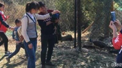 Chinese peacock murder