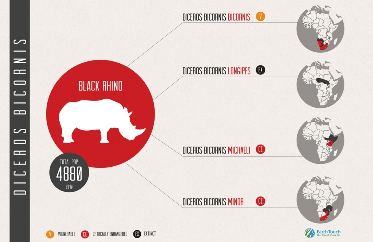black-rhino-info-graphic