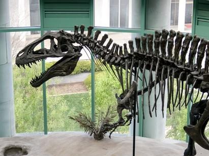 Acrocanthosaurs